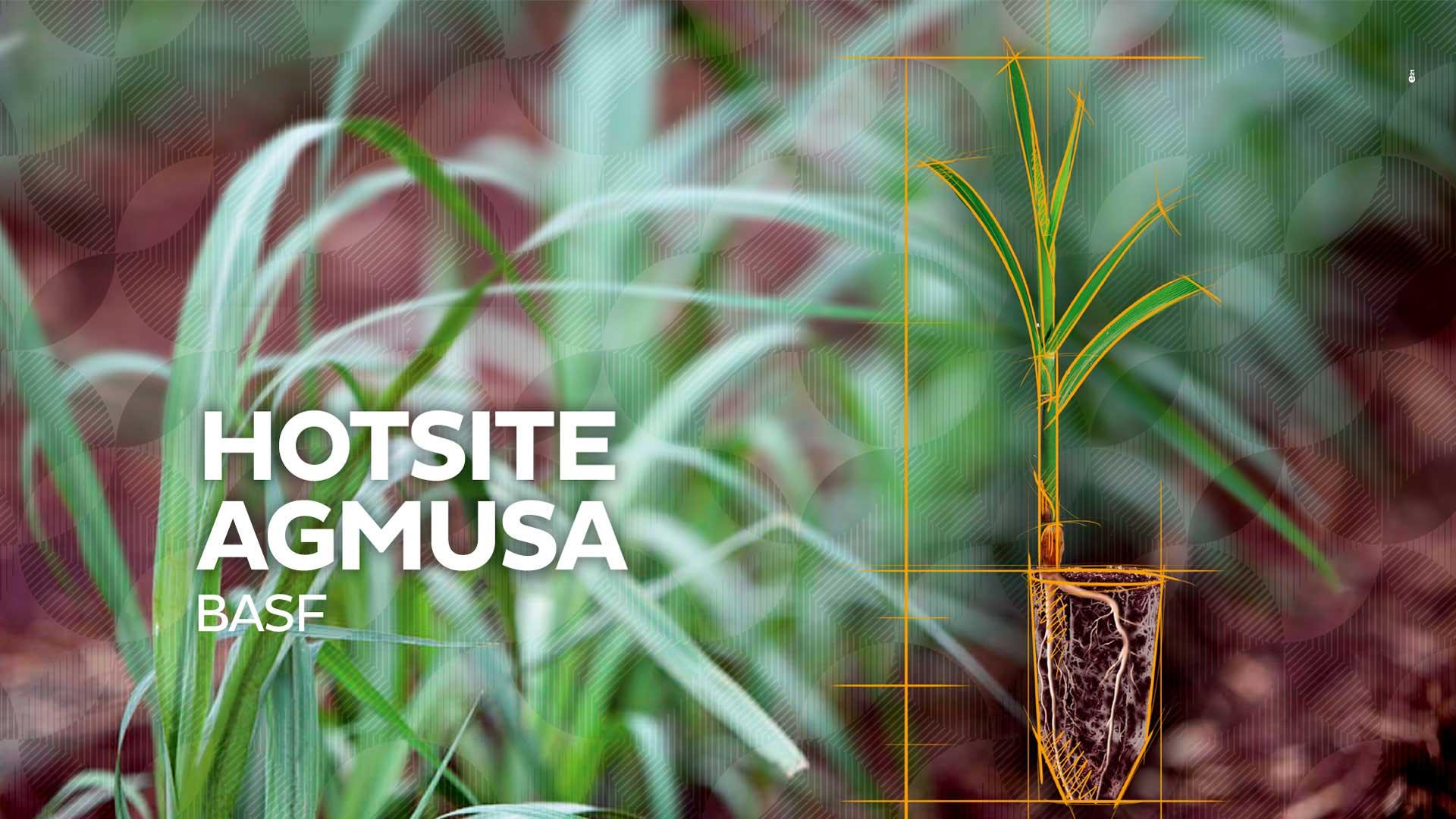 Case BASF: AgMusa
